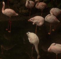 Flamingo Convention by Willys-Sweetheart