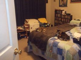 my cats on bed together by michelous