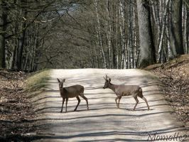 Deers on a forest path by Momotte2