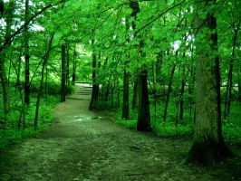 Paths of Green by Demodocus