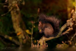 squirrel by LeronMasoN
