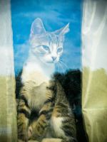 Jake in the Window by barefootphotos