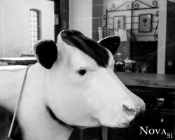 Cow in an Alley by Nova51Photography