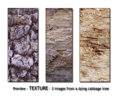 - TEXTURE - cabbage tree wood by Von-Chan