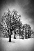 Under the crowns of the trees by Vlad-Off-kru