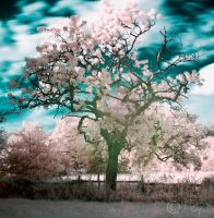 Infrared Tree by thecheekymunky