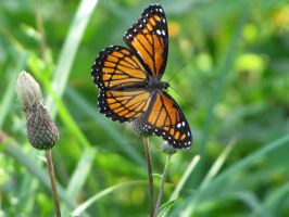 the butterfly world pic 4 by Nipntuck3