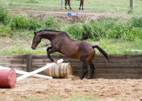 KM Old TB showjumping side view by Chunga-Stock