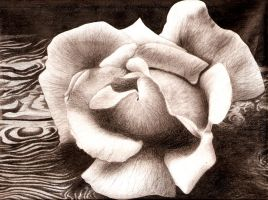 Graphite Rose on Driftwood by PillyTilly