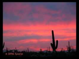 March Loud Lion Saguaro Sunset by RooCat