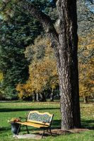 The Lone Bench by PLutonius