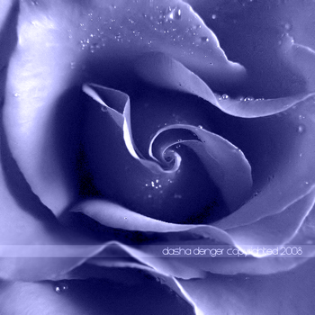 :Blue Rose: by onixa