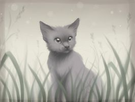Gray kitten by Ann-Nick