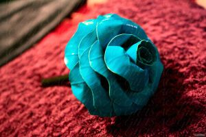 is it a rose? view one by lyssalove