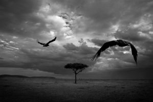 as the vultures fly by kdscv