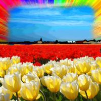 Sparkling tulips by picture-melanie