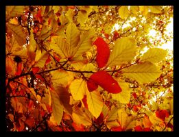 The leaves of autumn. by Batteryhq