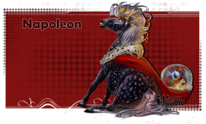 Napoleon by Moon-illusion