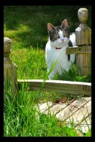 The Cat By The Bridge by Forestina-Fotos