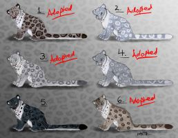 Female Snow Leopard Point Adopts - CLOSED by Nala15