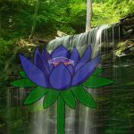 Water Lily by blissoblivion269