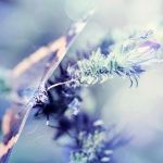 Natures Finest by Lady-Tori