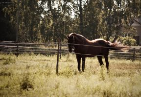 Stallion in field by kailay