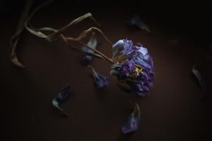 withered by zadveri