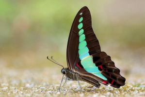 Common Blue Bottle 271108 by inckurei