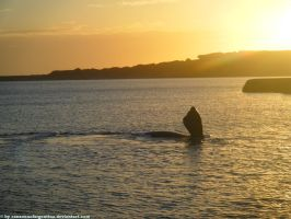 Southern Right Whale III by Cansounofargentina