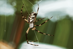 2 Hours Spider by ChrisDoebber