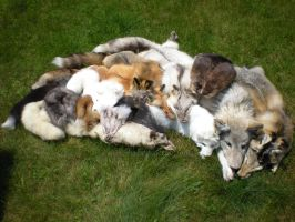 All my fluffs by NCIS2013