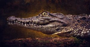 Nile crocodile by AngiWallace