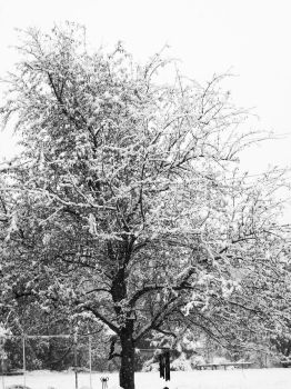 First Snow in Black and White by Angel-Escondida
