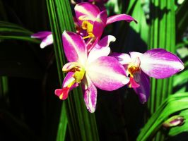 Purple Orchid 05 Stock by SDRandTH-Stock