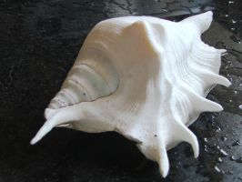 Shell 2 by karmasach