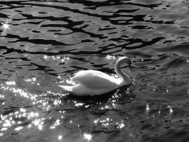 Swan II by CheshireSpider