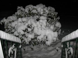 Step down to the Snow-Covered bush by WDWParksGal-Stock