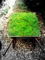 grass in a box by TomBydand