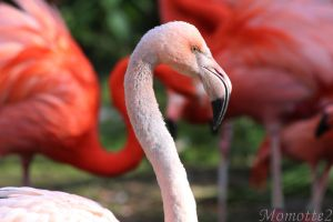 In the eye of the pink flamingo by Momotte2