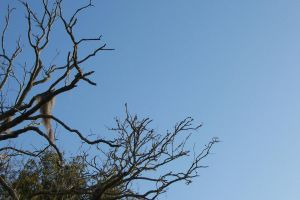 Bare branches, Spanish Moss by paintresseye