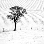 Furrows in the Snow by hold-steady
