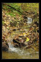 Forest Spring 01 by fetus0nthebeat