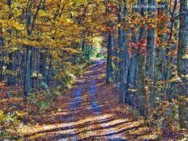 Path Into Autumn by jim88bro