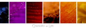 Colours of Life by mep92