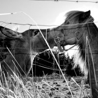 - The donkey and the horse - by lunatis