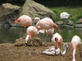 Flamingos 2 by ChristineMarieArt