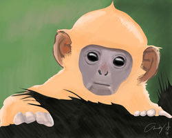 Monkey Drawing 2008 by andys184