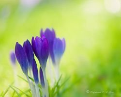 Early Spring by Raylau