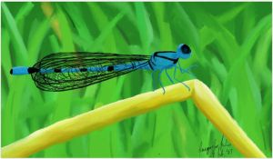 Damselfly Blue by jacquelynfisher